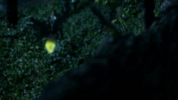 Discover the Forest TV Spot, 'Forest Light Show' - Thumbnail 5