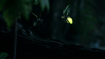 Discover the Forest TV Spot, 'Forest Light Show' - Thumbnail 6