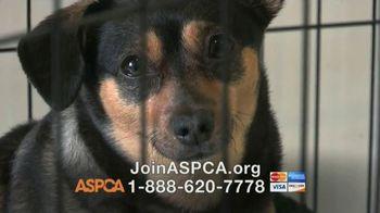 ASPCA TV Spot, 'The Unspeakable is Happening'