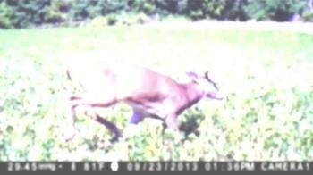 Browning Trail Cameras TV Spot, 'Faster, Smaller, Better' - Thumbnail 6