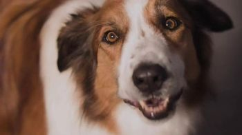 Purina Beneful Original TV Spot, 'Dinner for Two'