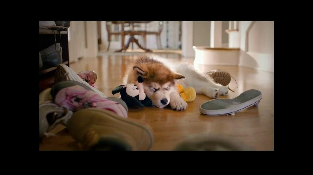 PetSmart TV Commercial Dog Types