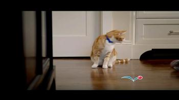 PetSmart Anniversary Sale TV Spot - Thumbnail 3