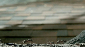 Orkin TV Spot, 'Ants in Trees' - Thumbnail 3
