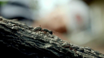 Orkin TV Spot, 'Ants in Trees' - Thumbnail 6