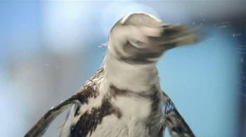 Dawn TV Spot, 'Cleaning Oil Spills' - Thumbnail 5