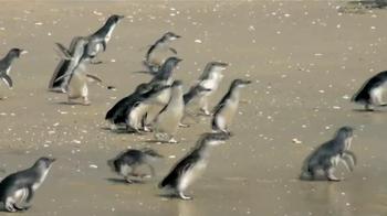 Dawn TV Spot, 'Cleaning Oil Spills' - Thumbnail 8