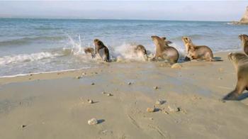 Dawn TV Spot, 'Cleaning Oil Spills' - Thumbnail 9