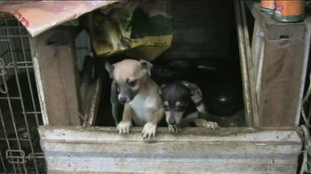 ASPCA TV Spot, 'Crying Puppies' - Thumbnail 3