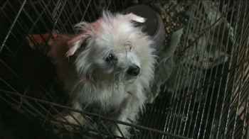 ASPCA TV Spot, 'Crying Puppies' - Thumbnail 5