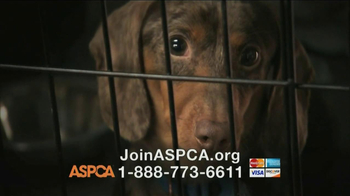 ASPCA TV Spot, 'Crying Puppies' - Thumbnail 7