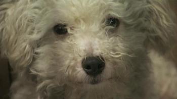 ASPCA TV Spot, 'Dogs' - Thumbnail 1