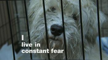 ASPCA TV Spot, 'Dogs' - Thumbnail 3