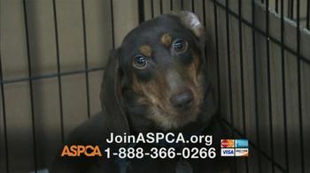 ASPCA TV Spot, 'Dogs' - Thumbnail 6
