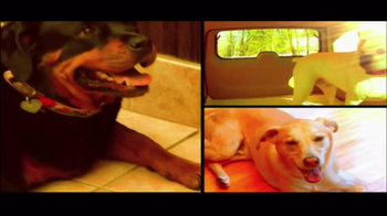 Chillow Pet TV Spot - Thumbnail 1