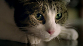 Friskies TV Spot, 'Night Lights' Song by Caught A Ghost - Thumbnail 10