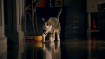 Friskies TV Spot, 'Night Lights' Song by Caught A Ghost - Thumbnail 3
