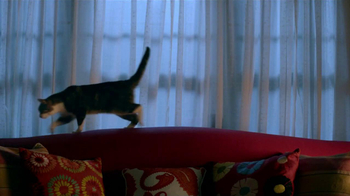 Friskies TV Spot, 'Night Lights' Song by Caught A Ghost - Thumbnail 7