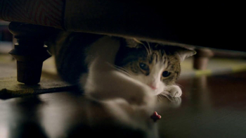 Friskies TV Spot, 'Night Lights' Song by Caught A Ghost - Thumbnail 9
