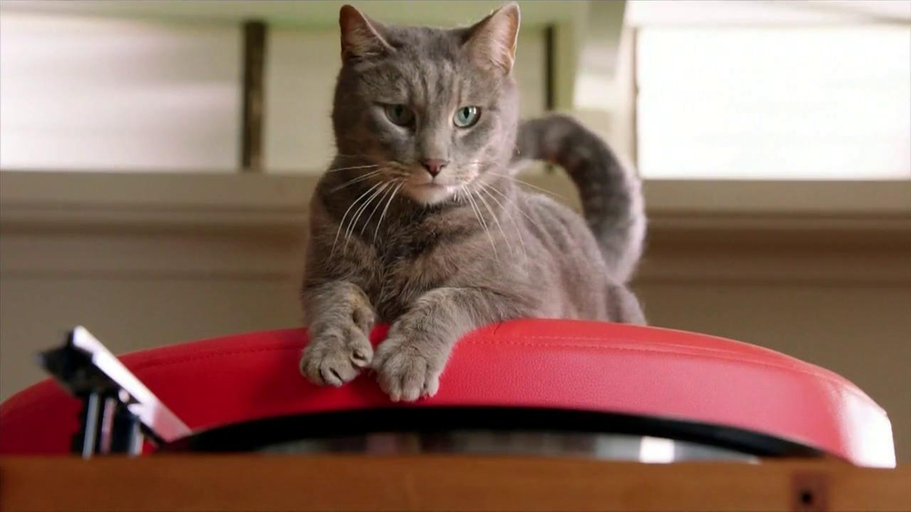 Purina Friskies TV Commercial, 'Take A Spin' Song Based on Donovan