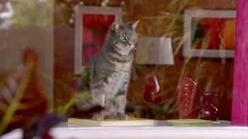 Purina Friskies TV Spot, 'Take A Spin' Song Based on Donovan - Thumbnail 6