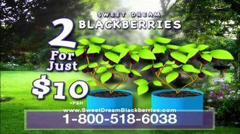 Sweet Dream Blackberries TV Spot