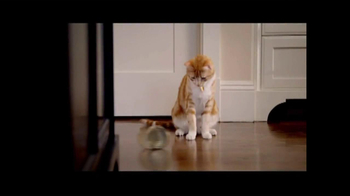 PetSmart Sping Savings Sale TV Spot, 'Sheba' - Thumbnail 1