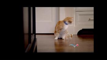 PetSmart Sping Savings Sale TV Spot, 'Sheba' - Thumbnail 2