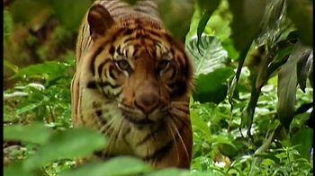 World Wildlife Fund TV Spot, 'Life of Pi'