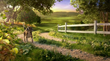Hill's Pet Nutrition Ideal Balance TV Spot, 'Ingredient Proportions' - Thumbnail 1
