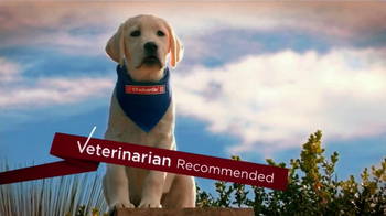 K9 Advantix II TV Spot, 'Fleas and Ticks'
