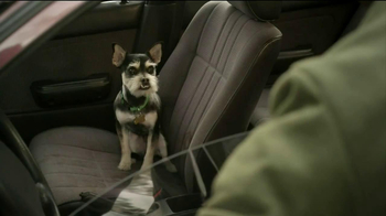 GEICO TV Spot, 'Dog Treats' - Thumbnail 3