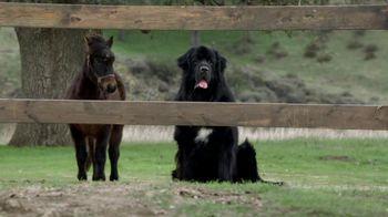 Bank of America BankAmericard TV Spot, 'Benny the Dog'