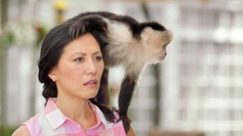 Sears Shop Your Way TV Spot, 'A Monkey's Uncle' Featuring Lorenzo Lamas - 1236 commercial airings