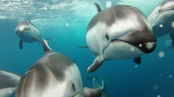 GoPro HERO3 TV Spot, 'Swimming with Dolphins' Song by Y La Bamba - Thumbnail 3