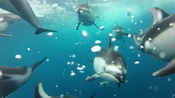 Swimming with Dolphins thumbnail
