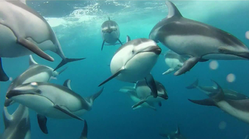 GoPro HERO3 TV Spot, 'Swimming with Dolphins' Song by Y La Bamba - Thumbnail 5