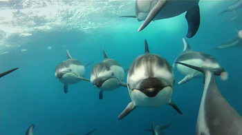 GoPro HERO3 TV Spot, 'Swimming with Dolphins' Song by Y La Bamba - Thumbnail 6