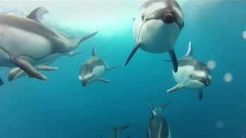 GoPro HERO3 TV Spot, 'Swimming with Dolphins' Song by Y La Bamba - Thumbnail 7