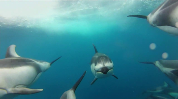 GoPro HERO3 TV Spot, 'Swimming with Dolphins' Song by Y La Bamba - Thumbnail 8