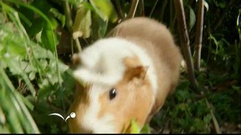 PetSmart TV Spot, 'National Geographic' - Thumbnail 4