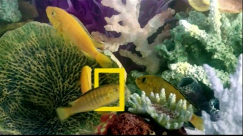 PetSmart TV Spot, 'National Geographic' - Thumbnail 5