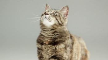 Cat's Pride TV Spot - Thumbnail 2