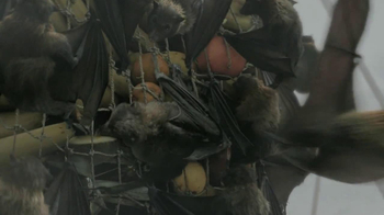 Captain Morgan TV Spot, 'Bats' Song by Greg Hale Jones - Thumbnail 5