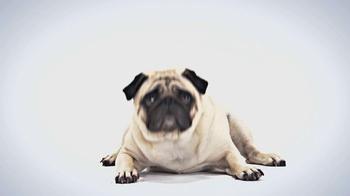 1-800-PetMeds TV Spot, 'Best-Kept Secret' - Thumbnail 2