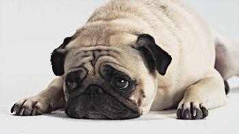 1-800-PetMeds TV Spot, 'Best-Kept Secret'