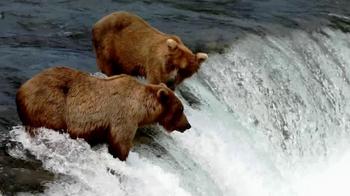 Two Bears thumbnail