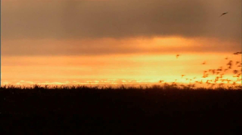Winchester Blind Side Water Fowl Ammunition TV Spot - Thumbnail 1