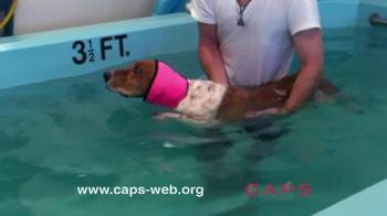 Companion Animal Protection Society TV Spot - Thumbnail 6