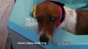 Companion Animal Protection Society TV Spot - Thumbnail 7